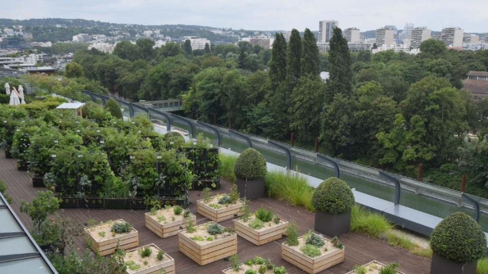 Urban Farming bei BNPPRE in Paris